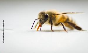 elhalt méhek pikkelysömör kezelése